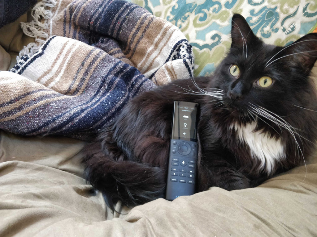 Photo of Savant remote with cat